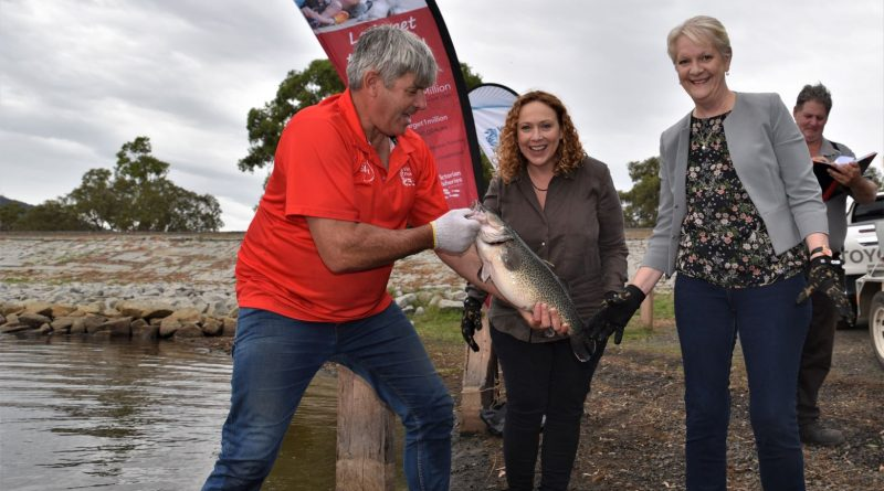 Ramps open with golden tag fishing comp relaunch